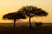 Sunrise, Kidepo Valley National Park, Uganda
