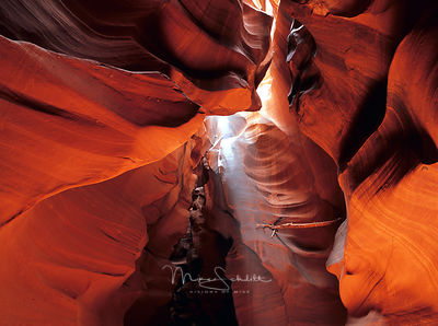 Arizona_slot_canyons_embedded_branch