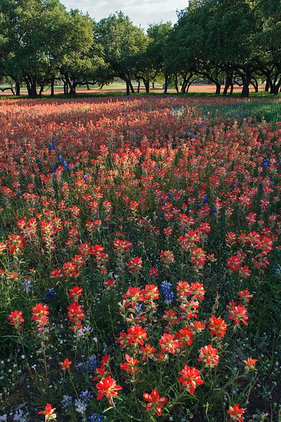 Texas Hill Country Spring
