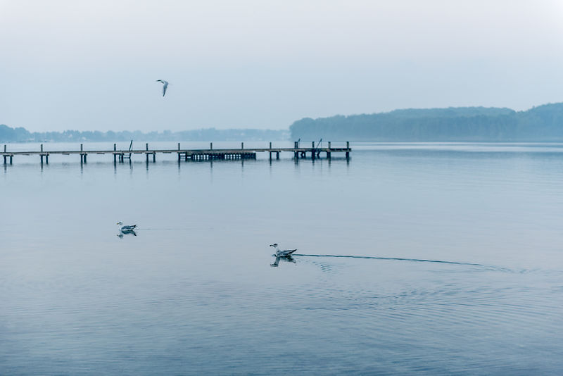 Gulls and a dock in Denmark