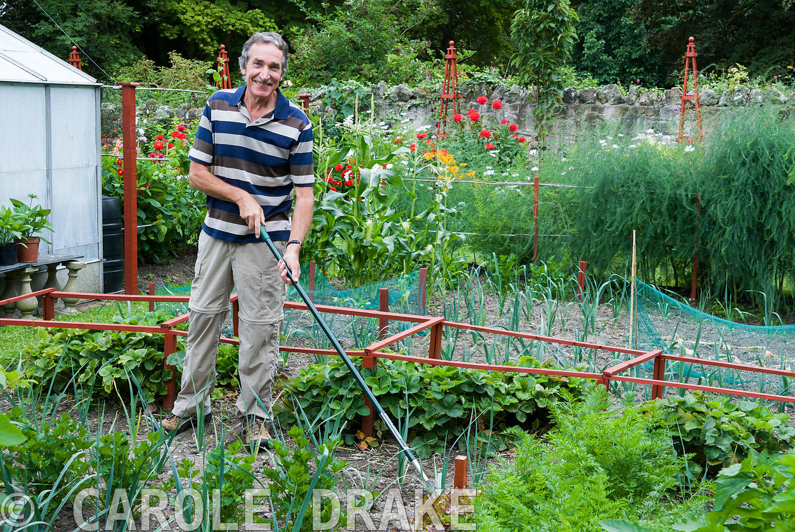 Christopher Russell hoeing in his vegetable patch. The Shute, nr Ventnor, Isle of Wight, UK