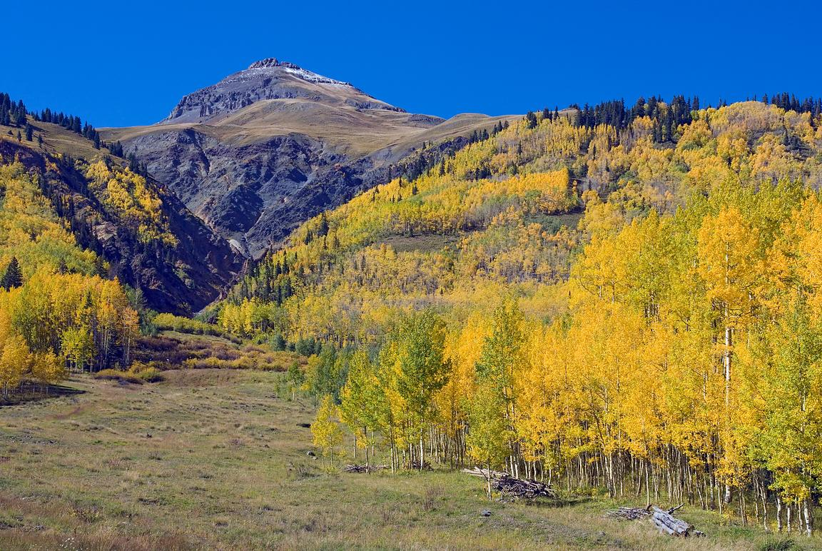 High Country Aspens