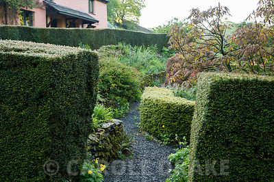 The 'best' garden at the front of the house is the most formal area of the garden, with clipped hedges of yew and box framing...