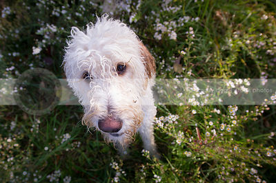 headshot of shaggy wet dog looking upward from flowers