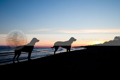 silhouette of two dogs standing on lake shore beach at sunset