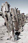 Old Groynes on beach, Spurn Head, East Yorkshire