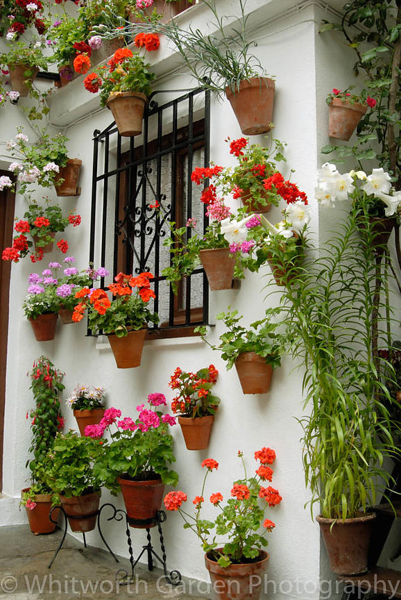 Traditional Spanish courtyard garden with Pelargoniums in terracotta pots hanging on whitewashed walls. The Cordoba & Jo and Rob Whitworth Garden Photography   Traditional Spanish ...