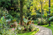 The Victorian Garden dominated by towering Chusan palms, Trachycarpus fortunei, surrounded by colourful beds of annuals inlcuding Ensete ventricosum, the Ethiopian banana, Dahlia 'Bishop of Llandaff', red foliage of Iresine herbstii 'Brilliantissima' and an edging of lobelia. Glowing yellow/green foliage of Robinia pseudoacacia 'Frisia' lights up the corner. Abbotsbury Subtropical Gardens, Abbotsbury, nr Weymouth, Dorset, UK