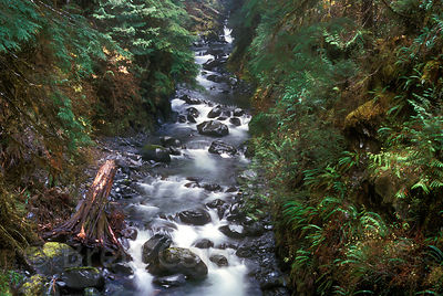 Tributary to the North Fork Sol Duc River, Olympic Rainforest, Washington.