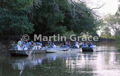 Tourist boat scrum watching Jaguars (Panthera onca) Hunter (female) and Hero (male) mating, Black Channel, River Cuiabá, Mato...