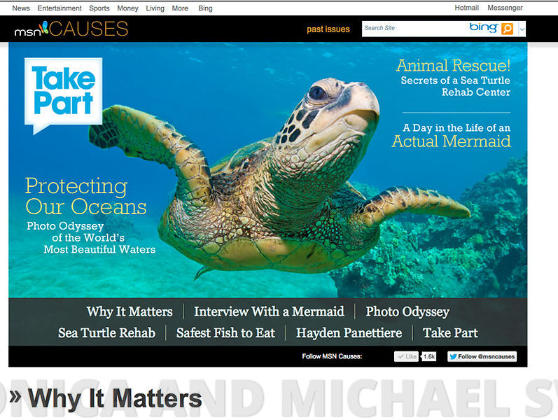 sea_turtle_msn