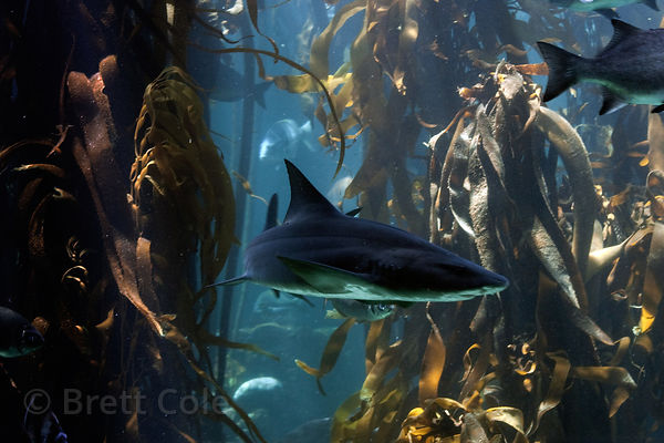 Shark (sp.), Two Oceans Aquarium, Cape Town, South Africa