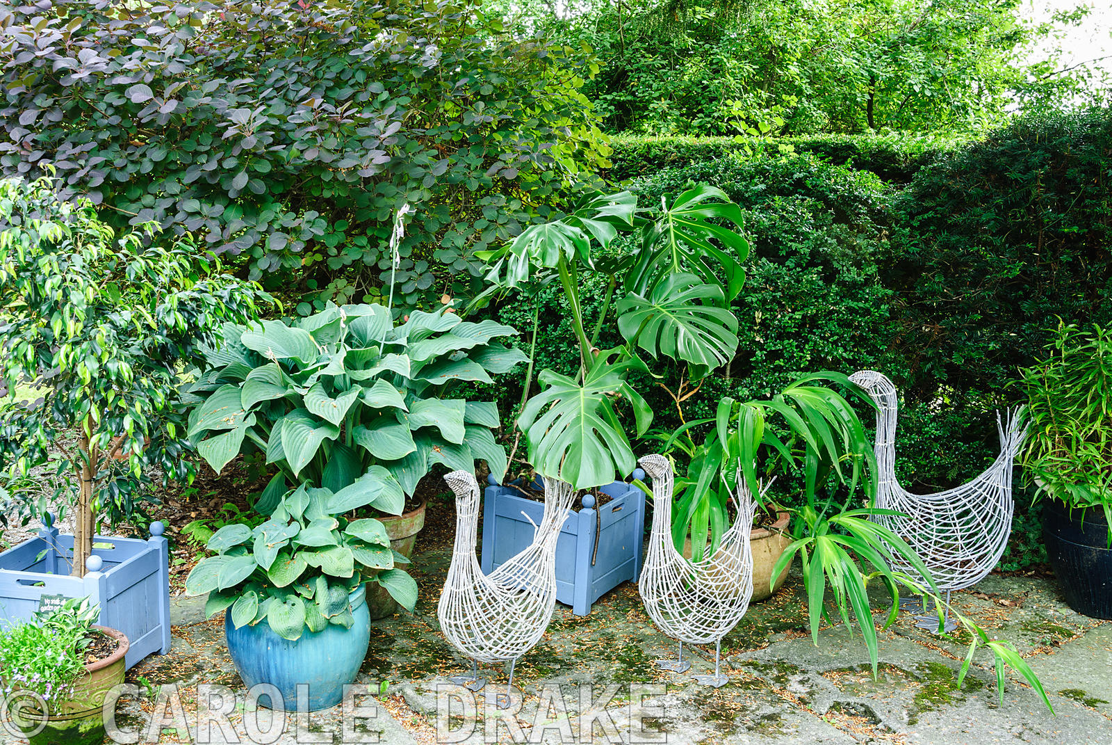 Decorative wire birds amongst pots of foliage plants including hostas, cheese plant and ficus. Beggars Knoll, Newtown, Westbu...