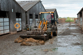 A JCB clears slurry on a dairy farm