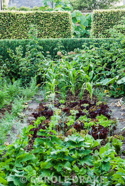 Fergus' vegetable garden is an integral part of the garden's overall design, with view beyond into the gravel garden, through...