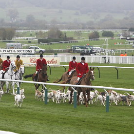 11th November 2011 Cheltenham Countryside Race Day