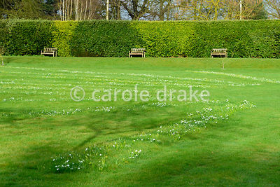 Lawn in front of the house planted with snowdrops in a pattern of radiating lines at Hodsock Priory, Blyth, Notts