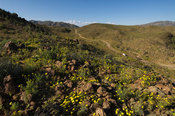 4x4 track through rugged scenery with spring flowers in Ai-Ais Richtersveld Transfrontier Park, Namaqualand, South Africa