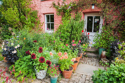 Pots of dahlias including 'Giraffe' and 'Twining's After Eight', rosemary and salvias crowd around the front door of the red ...