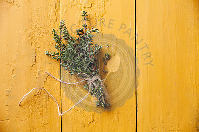 Bunch of fresh thyme on yellow background