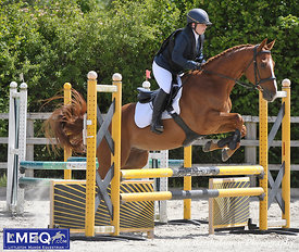 LMEQ Combinbed Training 6th June [70-80cm]