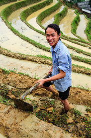 Hmong Man Clearing Weeds from Sides of Rice Paddies