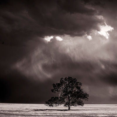Prairie tree and rainstorm | New Mexico | 2014
