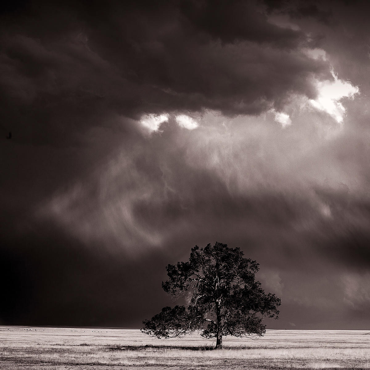 Prairie tree and rainstorm | New Mexico | June 2014