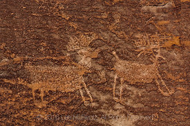 Elk Pictographs in Nine Mile Canyon