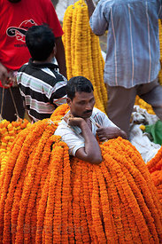 Workers at the Howrah Flower Market, commonly referred to as the largest flower market in Asia. Near Howrah Bridge along the ...