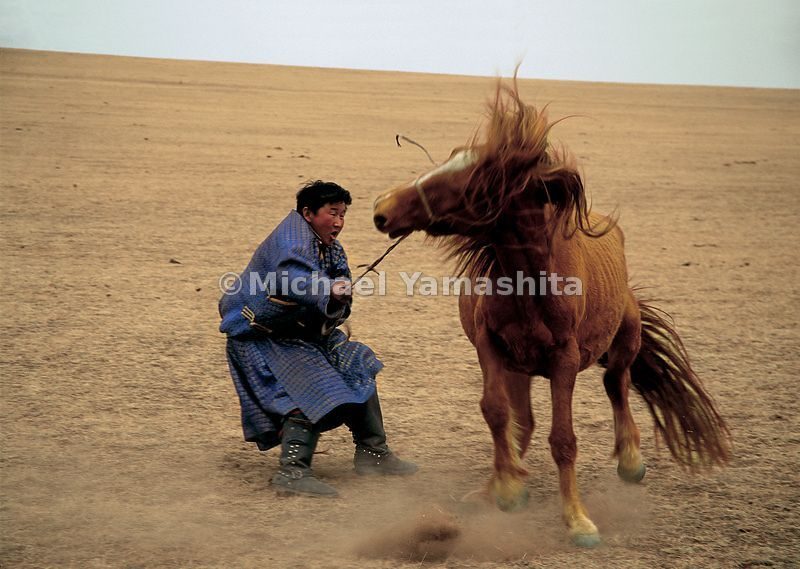 Brocade-clad cowboys wrangler their ponies for annual inoculations. The Mongolian horse has always been famed for its sturdin...