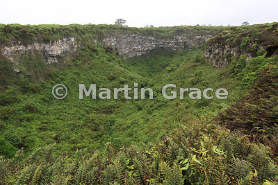 Los Gemelos (The Twins) sinkhole, Santa Cruz Highlands, showing dense growth of Scalesia pedunculata forest, Galapagos