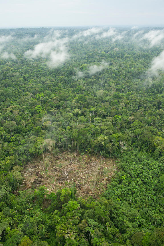 Aerial view of recent clearing along Maxus oil road, Yasuni National Park, Yasuni National Park, Amazon Rainforest, Ecuador, ...