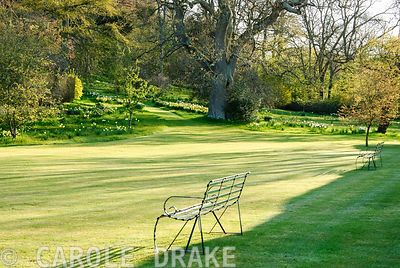 Shadows cast by early morning sun are cast across lawn of the pool terrace with informal area of garden studded with spring f...