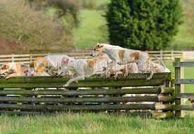 Quorn foxhounds jumping a hunt jump