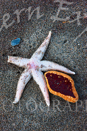 Starfish_and_Sponge