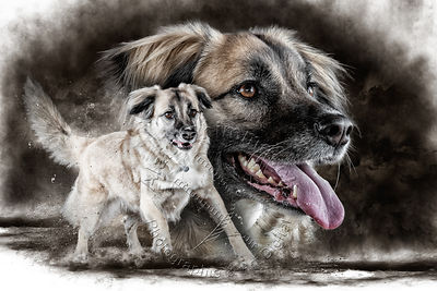 Art-Digital-Alain-Thimmesch-Chien-838