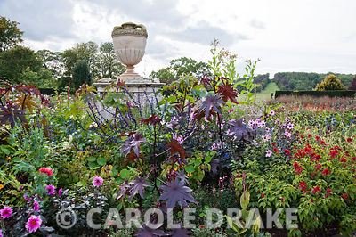 Centre circular bed in the rose garden with urn surrounded by a mass of flowers including amaranthus, dahlias, salvias and ri...