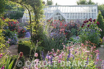 Rose arch clad with Rosa banksiae and smart Alitex greenhouse frame exuberant planting including dahlias, salvias, ageratum, ...