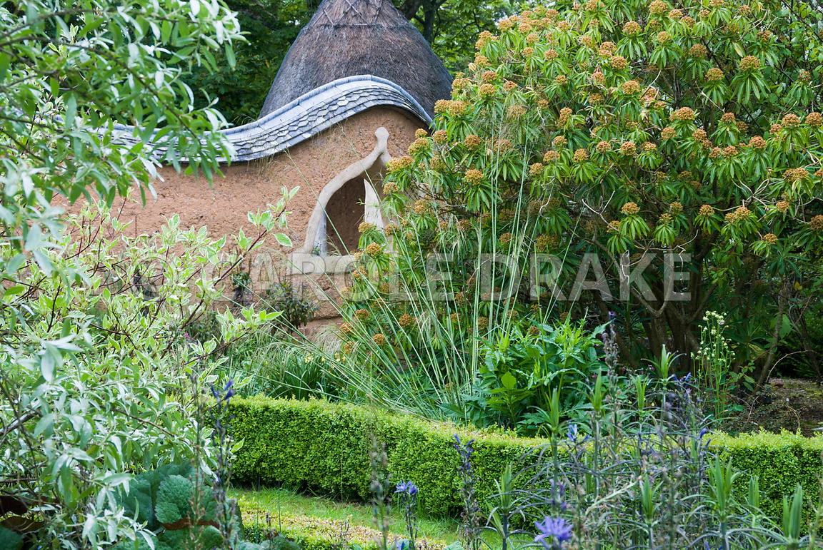View towards Pond Garden surrounded by cob wall, toipped with tiles and thatch, across box hedging, past silvery Eleagnus 'Qu...