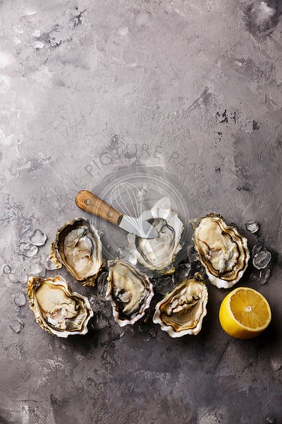 Opened Oysters and lemon on gray concrete texture background copy space