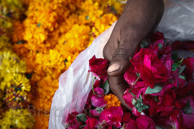 Flowers for sale in Jaipur, Rajasthan, India