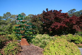 cool_image_of_plants_and_trees_at_botantical_gardens