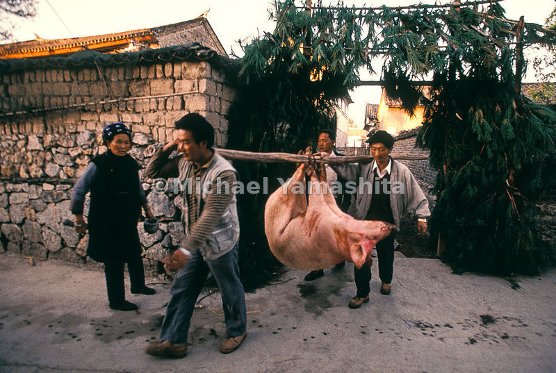 Men carrying a pig in Yunnan.