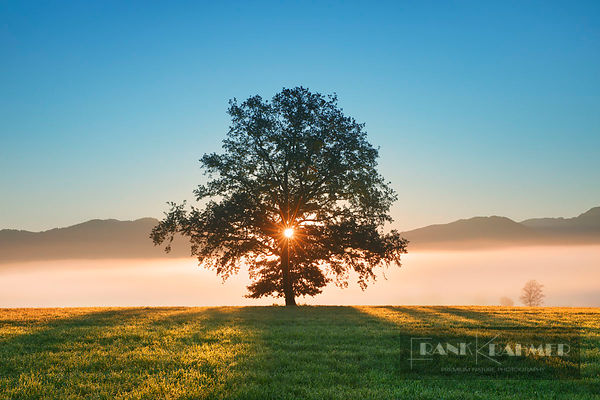 Sunrise impression with oak - Europe, Germany, Bavaria, Upper Bavaria, Weilheim-Schongau, Penzberg, Sindelsdorf - digital