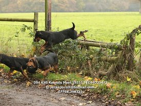 094_KSB_Kennels_Meet_241113_(C44O2547)