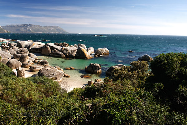 African penguin (Spheniscus demersus) habitat at Boulders Beach, South Africa