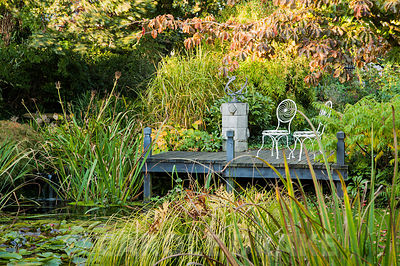 Pond with decking and metal chairs framed by autumn tints of Parrotia persica. Windy Ridge, Little Wenlock, Shropshire, UK