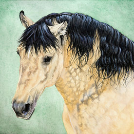 Horse and Pony Portraits