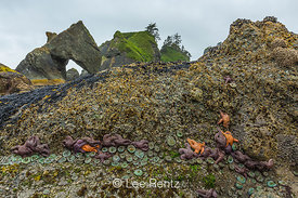 Zones of Intertidal Life at Point of Arches in Olympic National Park